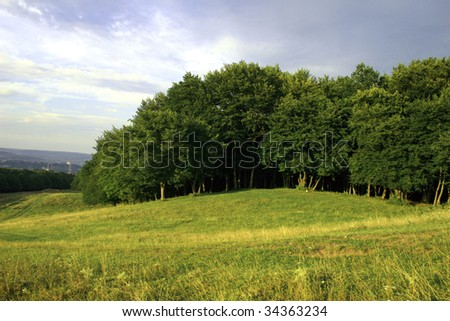 Edge of the forest on the green hill - stock photo
