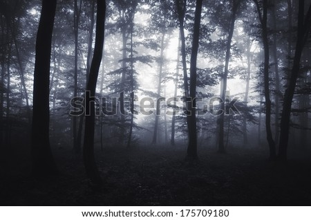 edge of the forest with glowing light and fog - stock photo