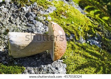 edible mushrooms  - stock photo