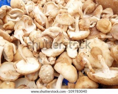 Edible mushrooms at a market place