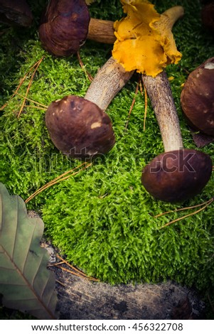 Edible mushrooms piled on the moss forest - stock photo