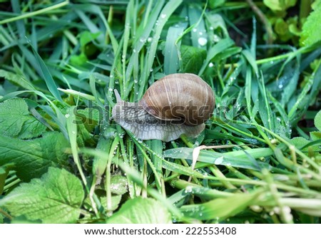 Edible snail (Helix pomatia) over a garden pond. Snails provide an easily harvested source of protein to many people around the world. - stock photo
