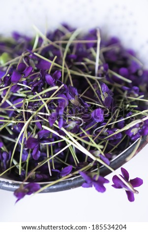 edible violets - stock photo