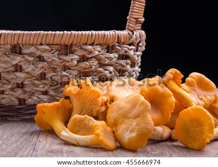 Edible wild mushroom chanterelle beside the basket - stock photo