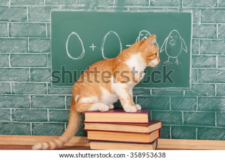 Education funny idea about red cat studying arithmetic on sample of addition of eggs - stock photo
