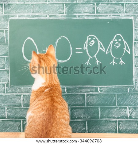 Education funny idea about red cat studying mathematics on sample of addition of eggs - stock photo
