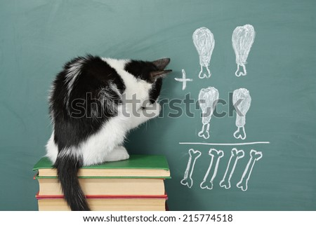 Education idea, joke about a  impudent cat studying arithmetic - stock photo