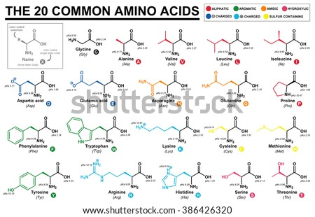 Educational Chart All Common Amino Acids Stock Illustration