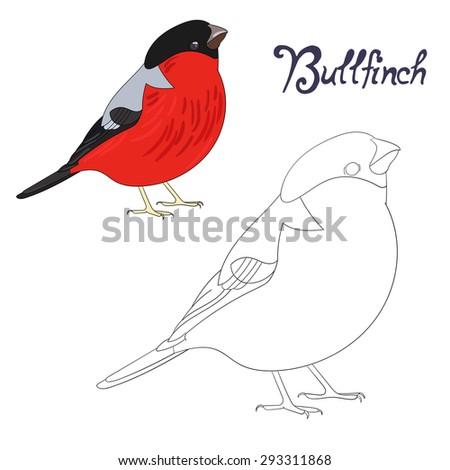 Educational Game Coloring Book Bird Raster Version