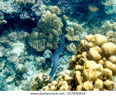 eel swimming refuge in stone reef - stock photo