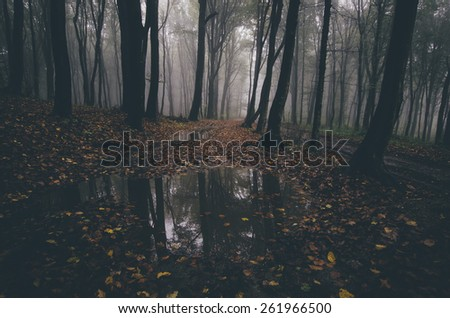 eerie forest reflecting in water - stock photo