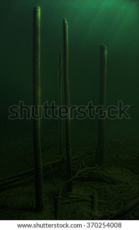 Eerie submerged trees  at the bottom of a man-made lake.                                   - stock photo