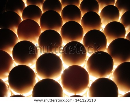 egg candling on hatchery farm to see which are fertilized. Many eggs in rows being illuminated from below