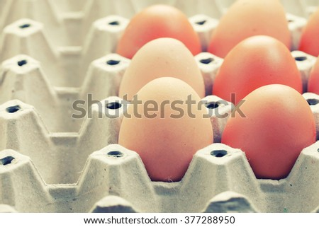 Egg, Chicken Egg on Paper tray package  - vintage filter. - stock photo