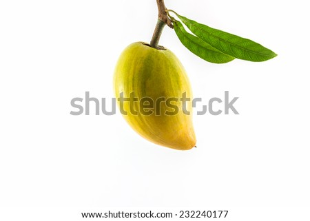 Egg fruit isolated on white background , Canistel, Yellow Sapote (Pouteria campechiana (Kunth) Baehni).