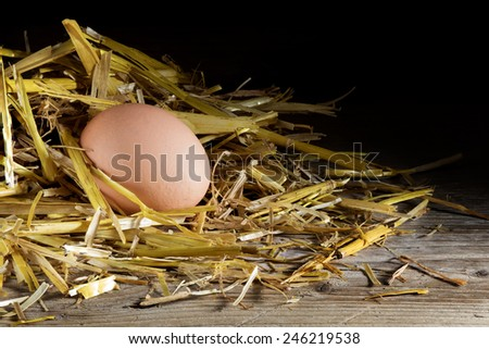 egg in a nest of golden straw on wood against a dark background with copy space