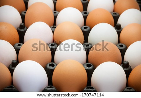 Egg in black package - stock photo