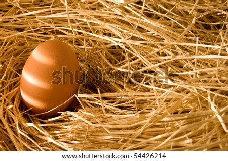 egg in farm straw, morning light