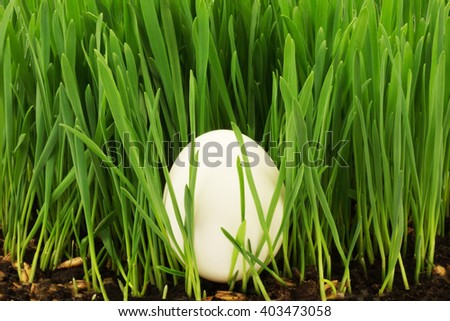 Egg in grass - stock photo