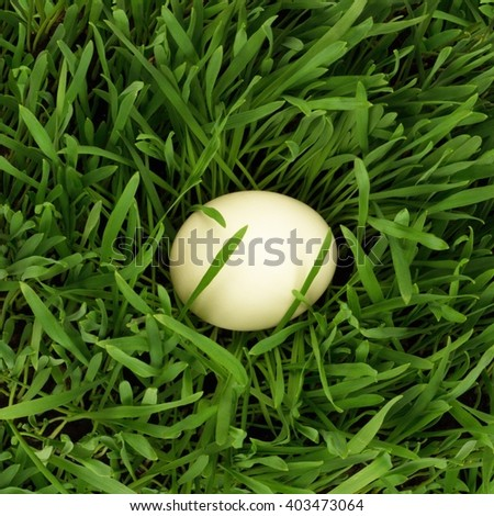 Egg in growing grass - stock photo