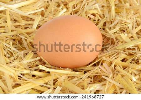 Egg in nest