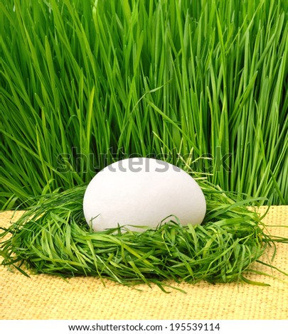 egg in the green nest against the green grass - stock photo