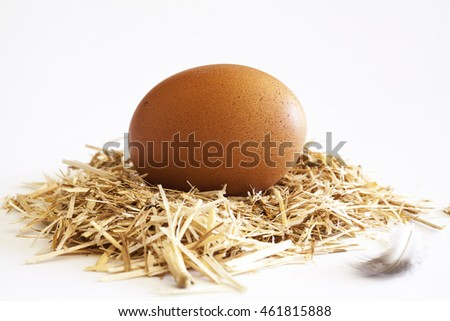 Egg in the nest on white background