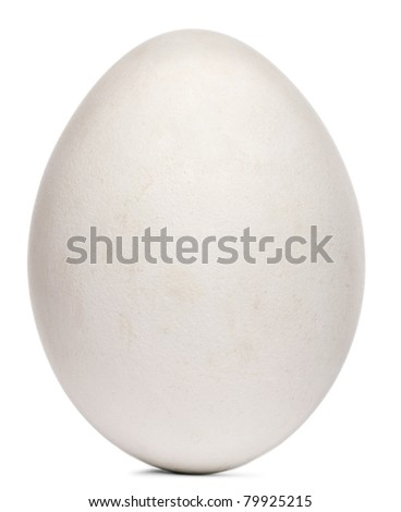 Egg of Griffon Vulture, Gyps fulvus, in front of white background - stock photo