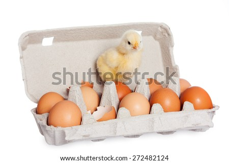 Egg package with cute baby chick - stock photo
