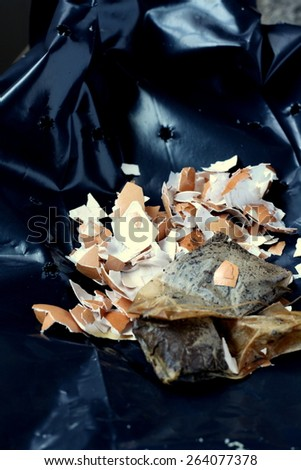 Egg shell and tea for compost - stock photo