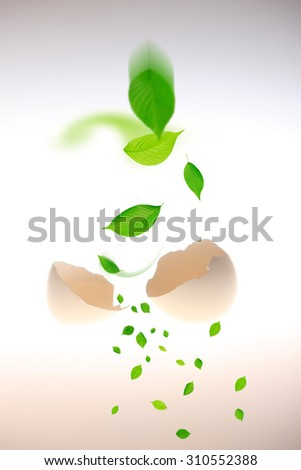 Egg, the leaf which is broken - stock photo