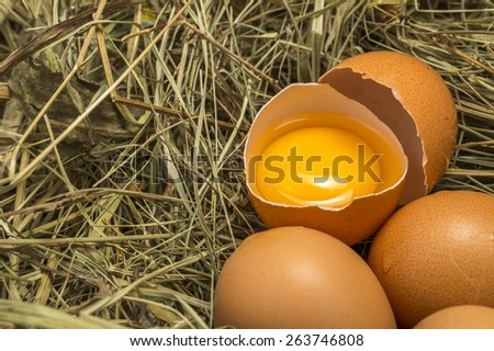 egg yolk closeup with chicken eggs - stock photo