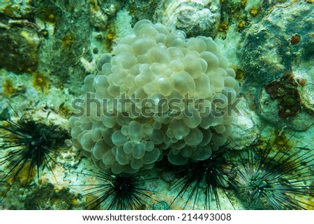Eggs and sea urchin - stock photo
