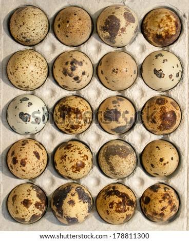 Eggs in a box - stock photo