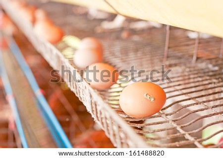 eggs in farm - stock photo