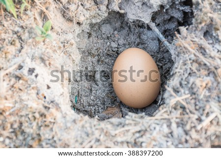 Eggs in holes of the ground