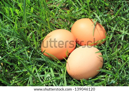 eggs in the grass isolated on a green background