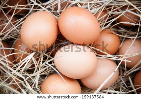 Eggs in the straw