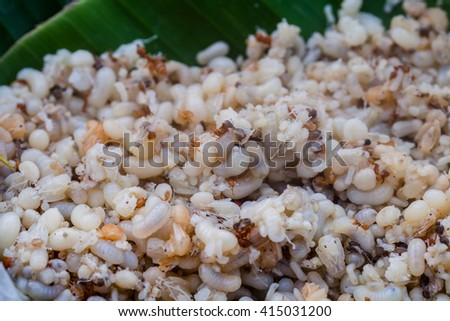 Eggs of ant and become the food later