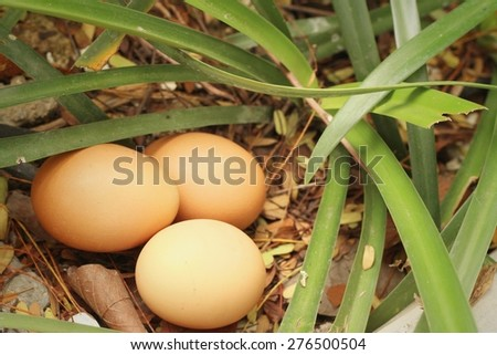 eggs on a background of green grass - stock photo