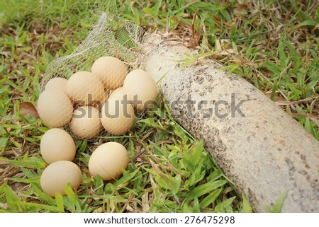 Eggs on a background of green grass at the park. - stock photo