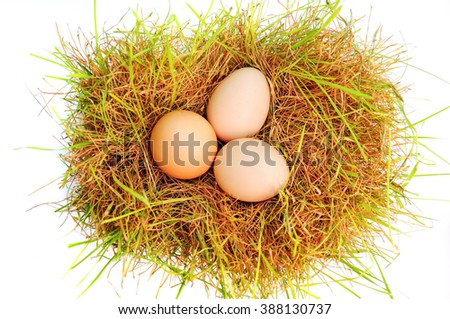 Eggs on a grass on a white background. Nest of chicken on white background.