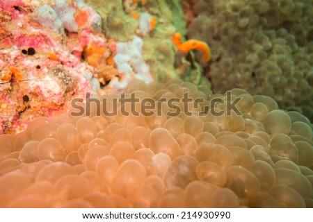 Eggs underwater - stock photo