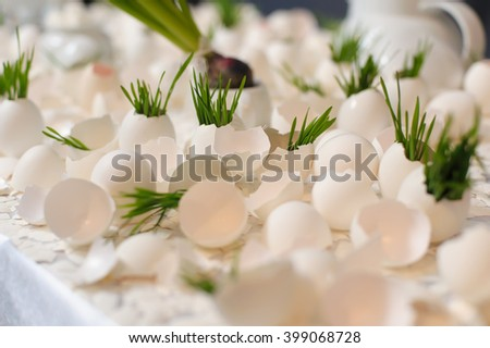 Eggshell and young shoots. Concept, symbolizing new life or new initiative. Earth Day. - stock photo