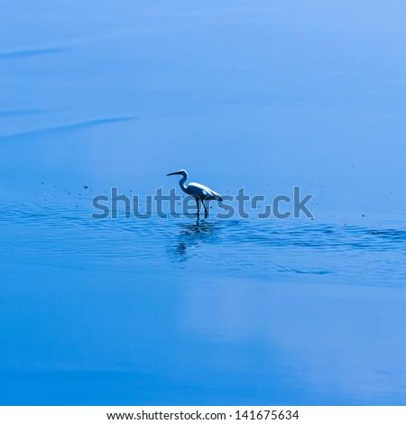 egret in gulf of thailand - stock photo