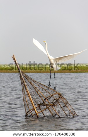 egret on The fish trap in lagoon - stock photo