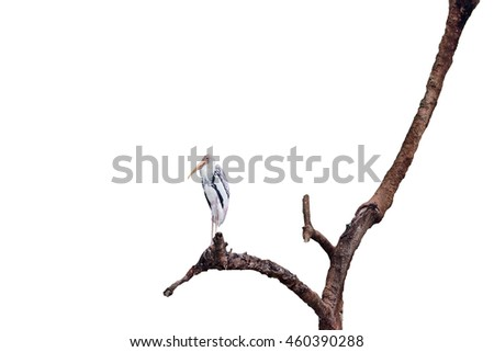 egret perched on tree .isolate on white background