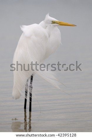 Egret stands against the wind - stock photo
