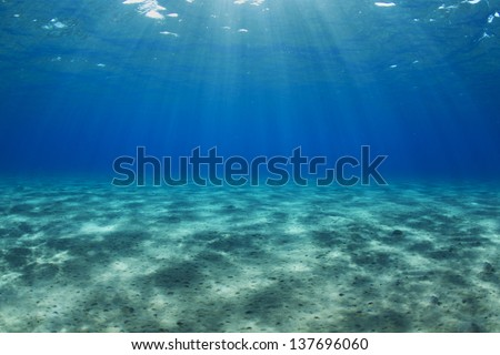 Egypt, Red Sea Shallow water ocean bed. / Underwater landscape - stock photo