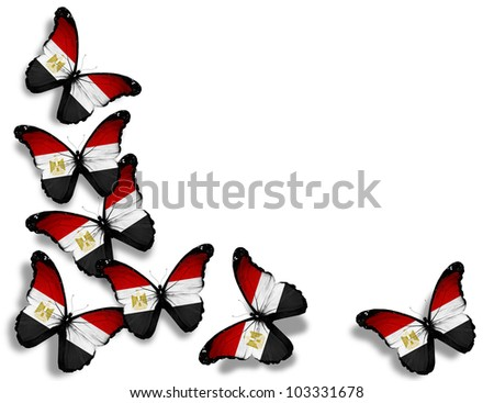 Egyptian flag butterflies, isolated on white background - stock photo